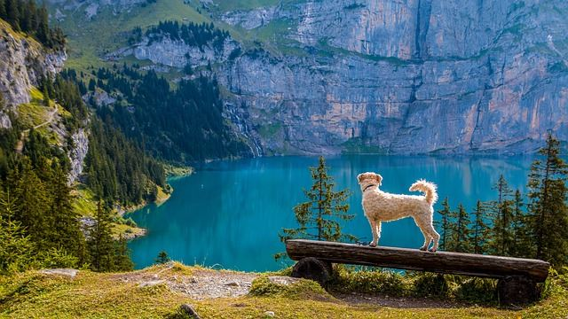What do Grade Schools and Mountains have to do with dog training?