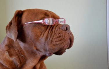 Research about what dogs can understand