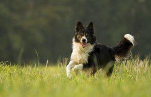 Is your dog an optimist?