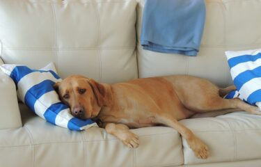 A simple doorway to the amazing benefits of relaxation in dogs – the behavioral down